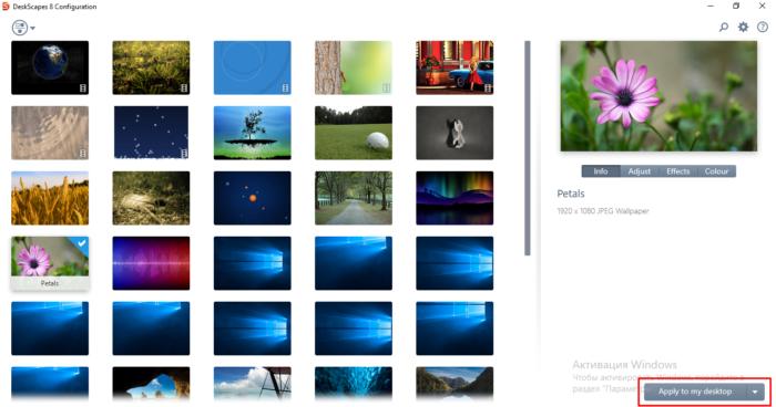 Выбираем вариант и нажимаем «Apply to my desktop»