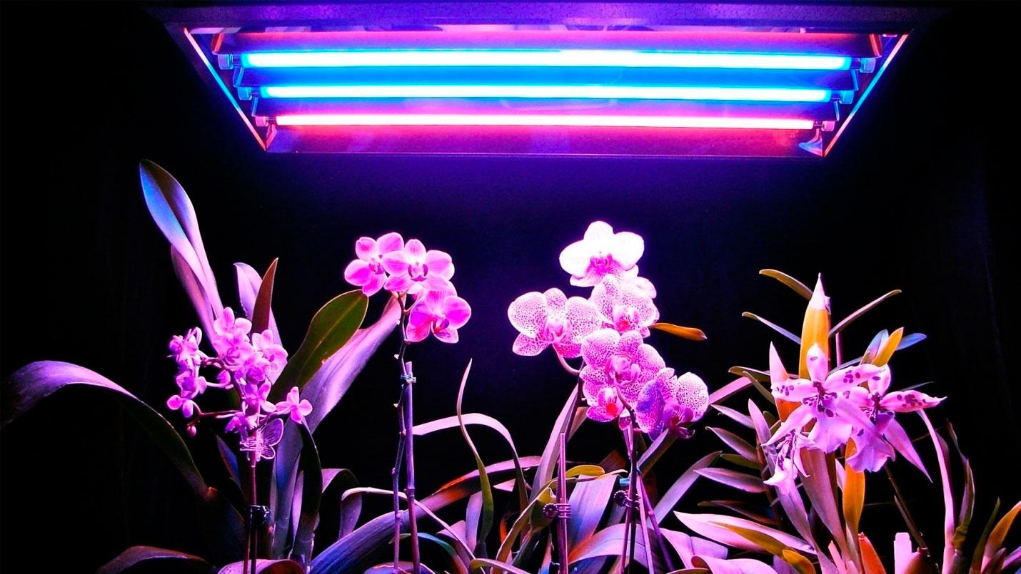 Лампы с люминесцентным освещением